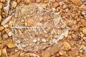 Foglia pipal — Foto Stock
