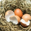 Stock Photo: Hatched egg