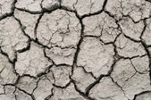 A area of dry land for a drought concept or metaphor. — 图库照片