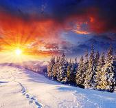Snow winter trees — Stock Photo