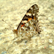 Butterfly on cement — Stock Photo