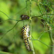 Stock Photo: Yellow caterpillar