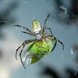 Stock Photo: Green prey
