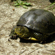 Europewater turtle — Stock Photo #25842457