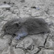 Stock Photo: Lonely mouse