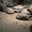 Some turtles — Stock Photo