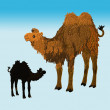 Camel with black baby — Stock Photo