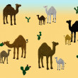 Camel family — Stock Photo