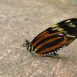 Butterfly on stone — Stock Photo #42006163
