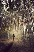 Forest Running — Stock Photo