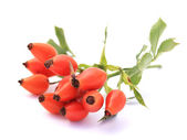 Rosehips — Stock Photo