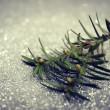 Twig on silver background — Stock Photo
