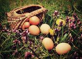 Huevos en pasto — Foto de Stock