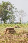 Hay bales in the garden — Stock Photo