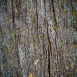 Texture of bark wood use as natural background — Stock Photo #46314413