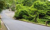 Strada deserta con albero su entrambi i lati — Foto Stock