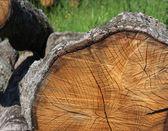 Oak Wood — Stock Photo