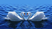два лебедя в любовь в озере. — Стоковое фото