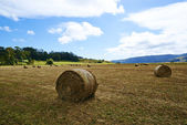 View of the field — Stock Photo