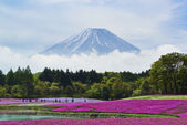 Pink moss flowers and Mount Fuji in japan — Stock Photo