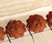 Chocolate muffins with raisins on a wire rack — Stock Photo