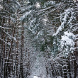 Winter lanscape, snow forest — Stock Photo