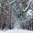 Winter lanscape, snow forest — Stock Photo #17354973