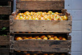 Wooden crate with oranges — Stock fotografie