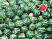 Watermelons — Foto de Stock