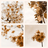 Bloemen collage — Stockfoto
