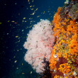 Stock Photo: Colorful underwater reef of Raja Ampat Papua, Indonesia