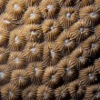 Hard coral macro detail from Raja Ampat, Papua Indonesia — Stock Photo