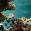 Stock Photo: Box fish in reef background