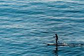 Un homme ramer debout sur une table de surf sur le bleu de la mer — Photo