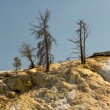 Yellowstone Mammoth hot springs — Stock Photo