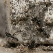 Ants running on rocks — Stock Photo #20185873