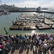 San Francisco Pier 39 sea lions big view — Stock Photo