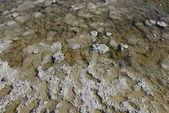 Death Valley badwater salt detail — Stock Photo