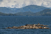 Sea lions resting on a rock near Whittier, Alaska — Stock Photo