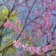 Pink flowers blossom in Maryland — 图库照片 #25217053