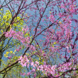 ストック写真: Pink flowers blossom in Maryland