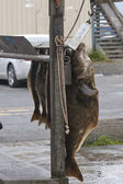Fish Catch of the day in Homer, Alaska — Stock Photo