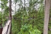 Capilano suspension bridge park in Vancouver — Stock Photo