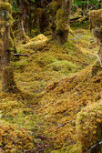 Moss covered forest path — Stock Photo