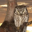 Isolated Owl on the sunset yelllow background — Stock Photo