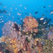 Stock Photo: Colorful underwater landscape reef of Raja Ampat Papua