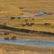 Buffalo Bison in Yellowstone — Stockfoto #28175855