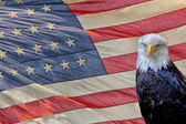 Eagle on star and stripes flag — Stock Photo