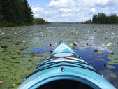 Water Lily lake view from Kayak — Stock Photo