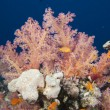 Underwater landscape of red sea — Stock Photo